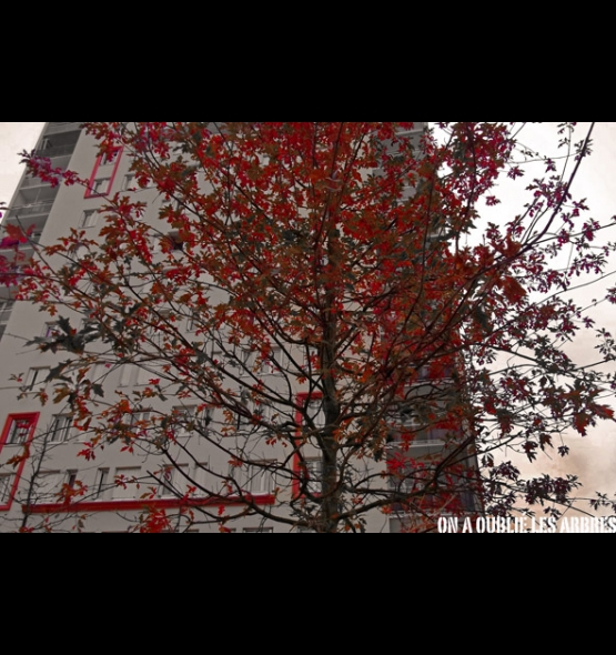 g_12_40_arbre