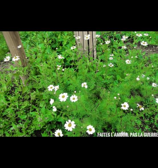g_12_52_fleur